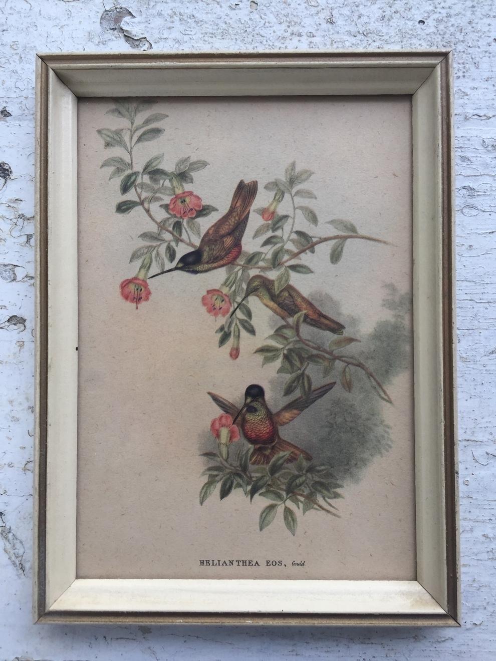 Bird Print I